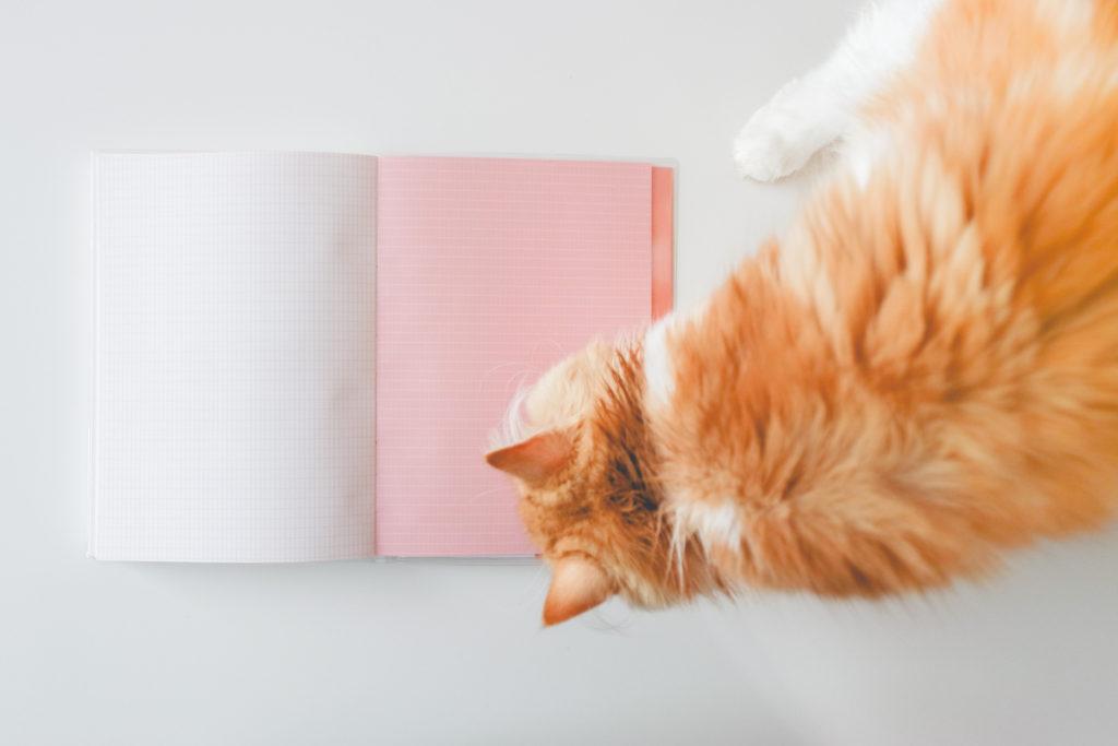 agenda-perpetuel-journalier-chat